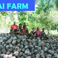 Tinopai Farm