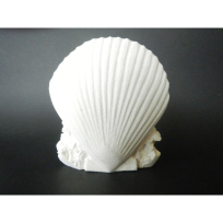 Stone Carved Shell - Carving